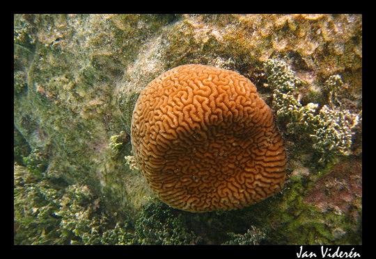 090210_underwater1