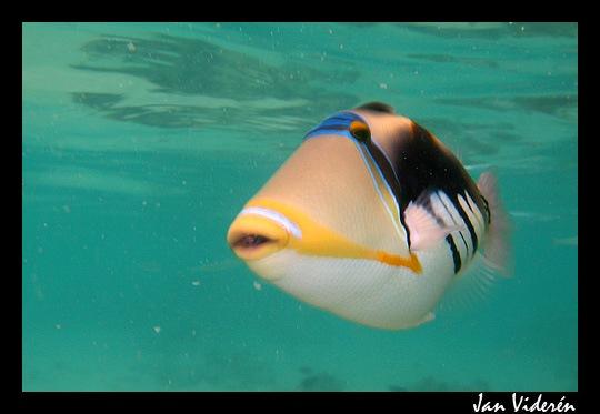 090210_underwater3