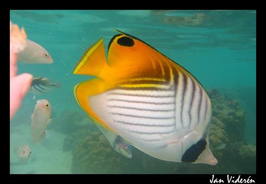 090210_underwater4