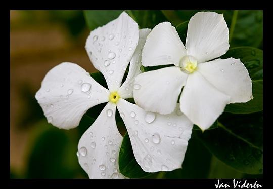 090212_flowers2