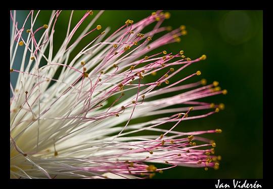 090212_flowers4
