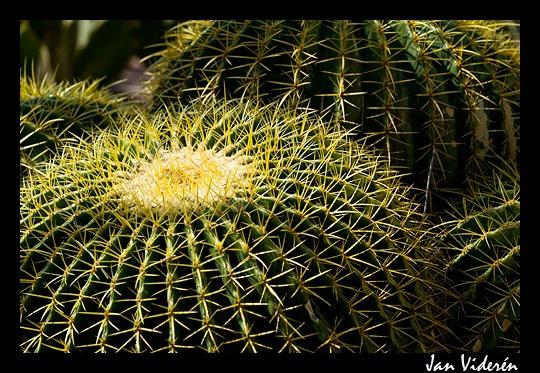 090517_botanical09
