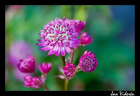 090623_flowers