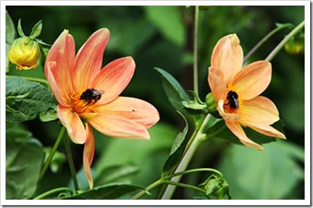 070811_flowers1