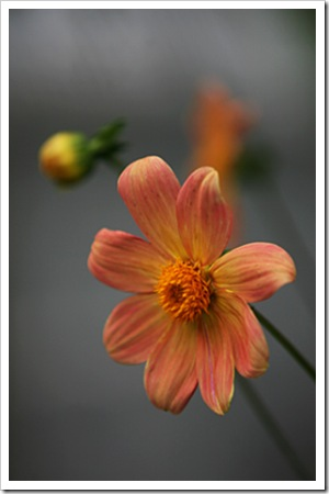070811_flowers2
