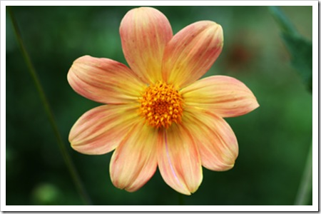 070811_flowers3
