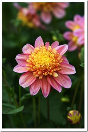 070811_flowers5