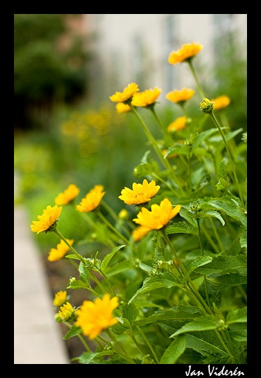 080628_flowers
