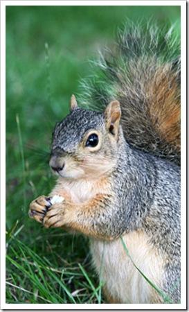 070705_squirrel2