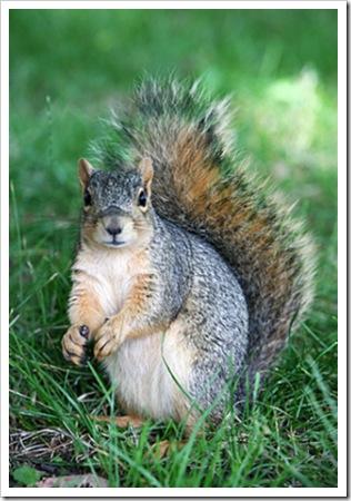 070705_squirrel