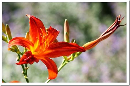 070726_flower1