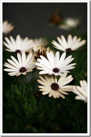 070726_flower2