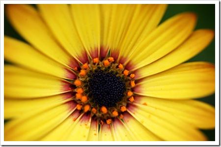 070726_flower3