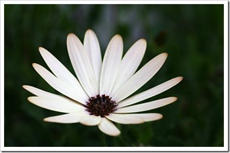 070726_flower4