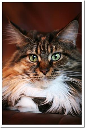 070804_cat1