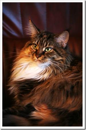 070804_cat2