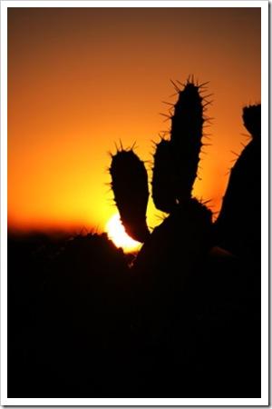 070624_saguaro2