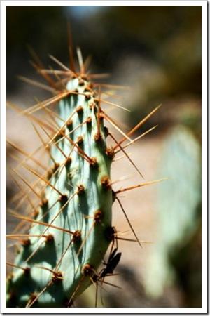 070625_saguaro4