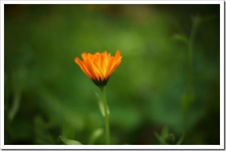 070721_flower1