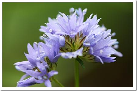 070721_flower2
